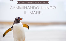 cover - FRANCESCO PELLICINI-Camminando_lungo_il_mare-big